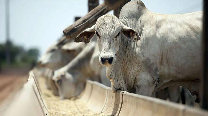 carne bovina 10 06 2019
