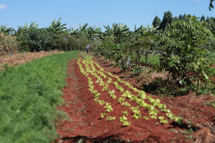 agricultura familiar 13 06 2019
