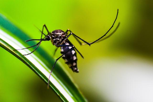 saude dengue 25 08 2021
